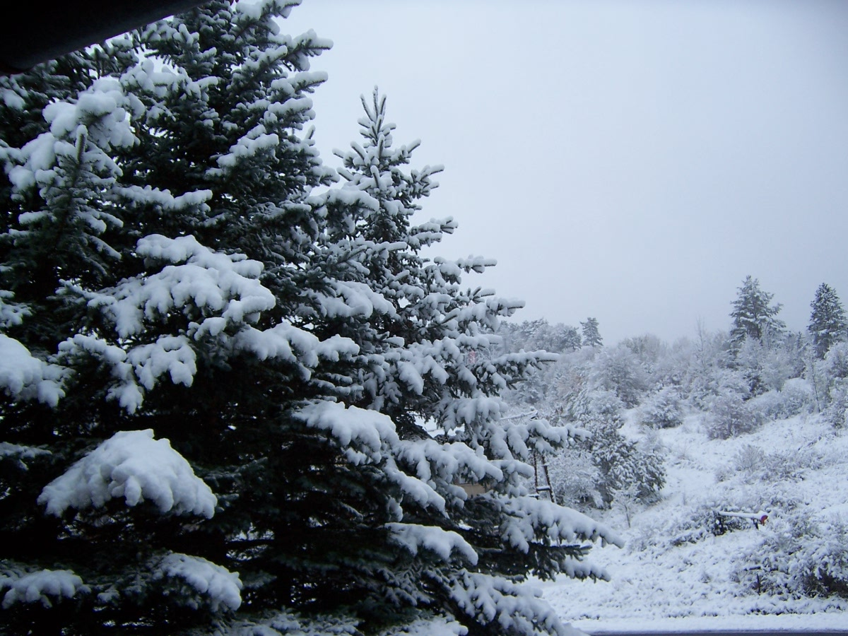 Tél a Magas-Bakonyban