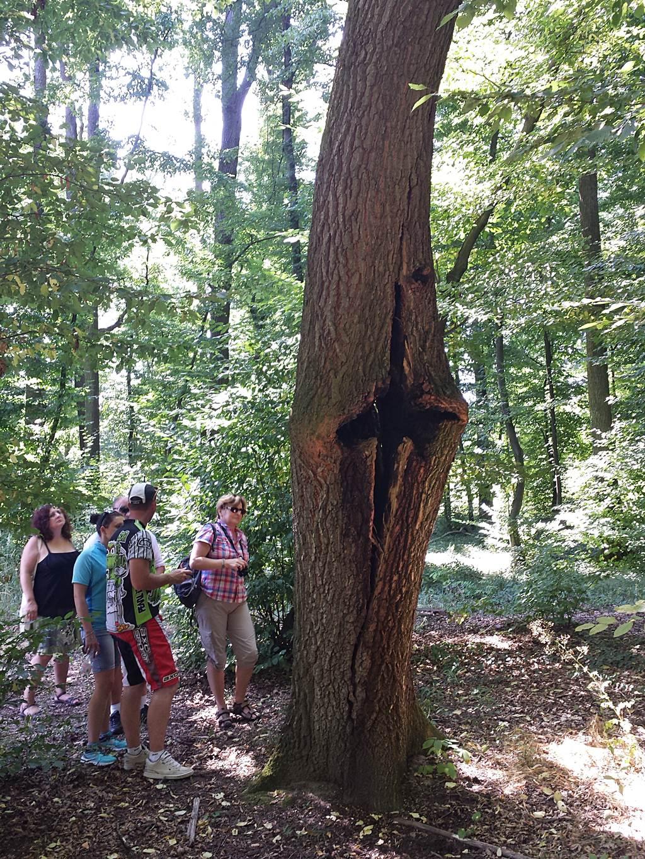 Kellemes árnyas tanösvények várják a látogatókat a Kupi-erdőben Forrás: www.mozgasvilag.hu