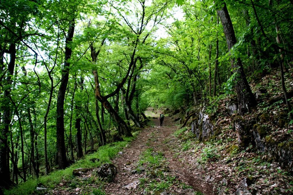 Az erdei út néhol meredek, köves, alapvetően árnyékos ösvényen halad ForrĂĄs: www.mozgasvilag.hu