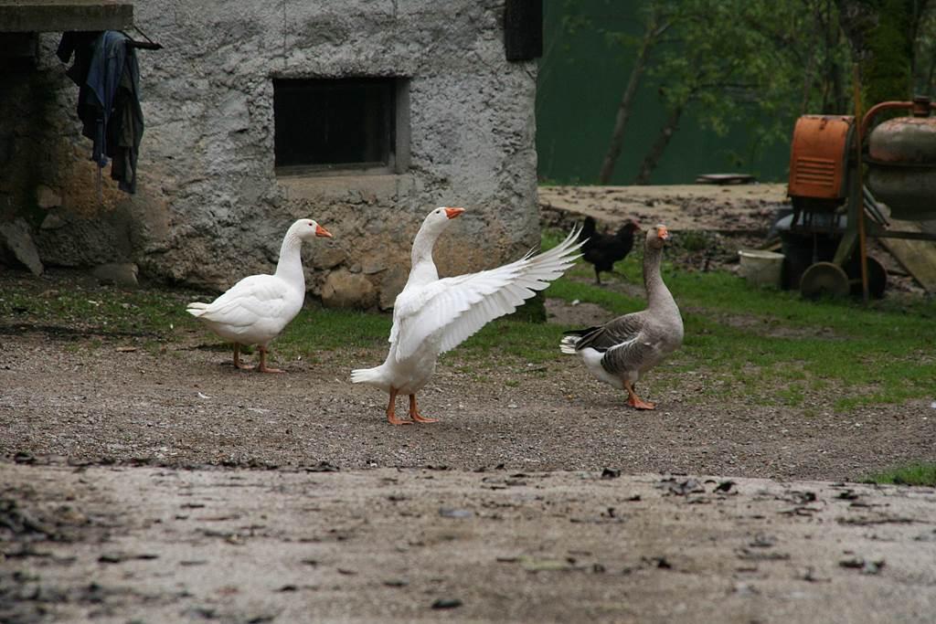 Indulás a ludas farm mellől. Forrás: www.mozgasvilag.hu
