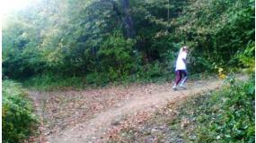 Normafa - majdnem sétagalopp
