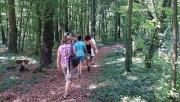 Erdei Iskola és Szentkút túraút a Kupi-erdőben
