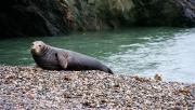 Wicklow tengerparti fókales túra