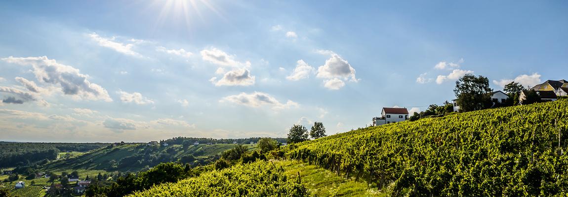 Dél Burgenland Forrás: (c) Burgenland Tourismus