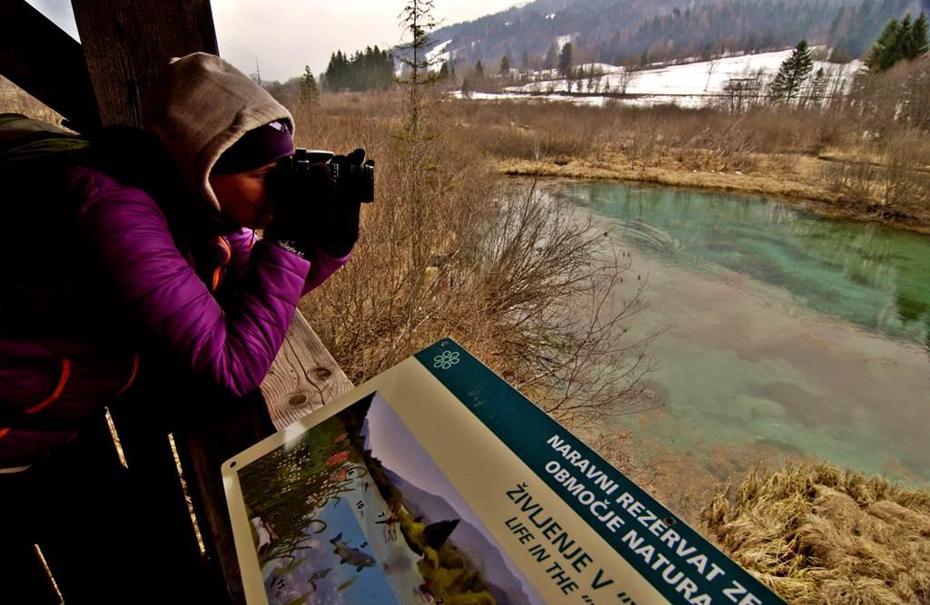 Zelenci tó kilátó Forrás: www.mozgasvilag.hu