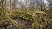 Széljelentés a pilisi erdőkből