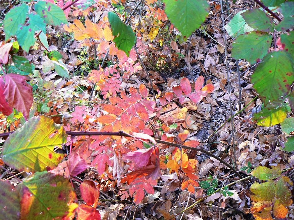 Őszi hangulat - levelek és formák Királyréten