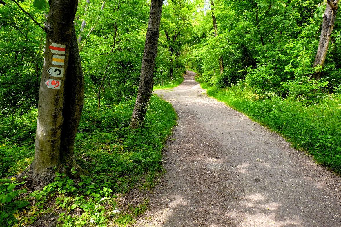 Sűrű erdőben vezet utunk Forrás: Vígh-Tarsonyi Gergő - Mozgásvilág.hu
