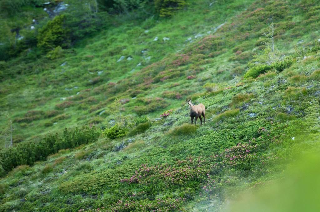 Alpe-Adria Trail Forrás: (c) Kärnten Werbung, Fotograf: Franz Gerdl