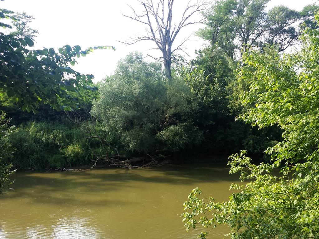 A kirándulás során megcsodálhatjuk az ártéri erdő szépségét ForrĂĄs: www.mozgasvilag.hu