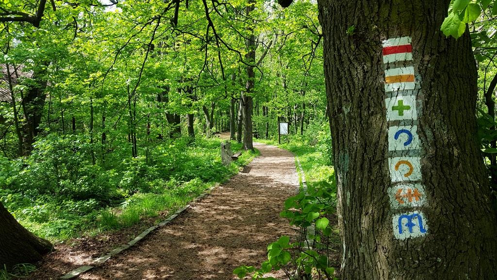 Amíg az út nem válik szét, az összes jelzést követjük Forrás: Mozgásvilág.hu