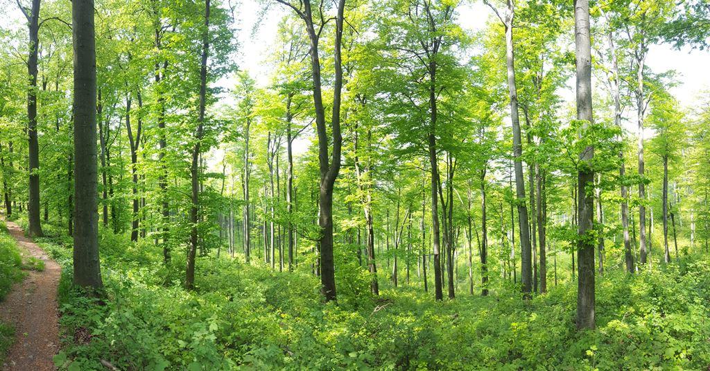 Kellemes egynyomos kis ösvény kanyarog az erdőben Forrás: Mozgásvilág.hu