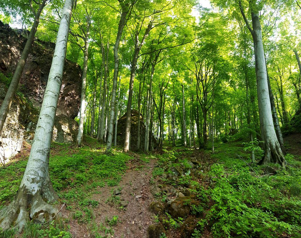 Meredek hegyoldal tornyosul fölénk Forrás: Mozgásvilág.hu