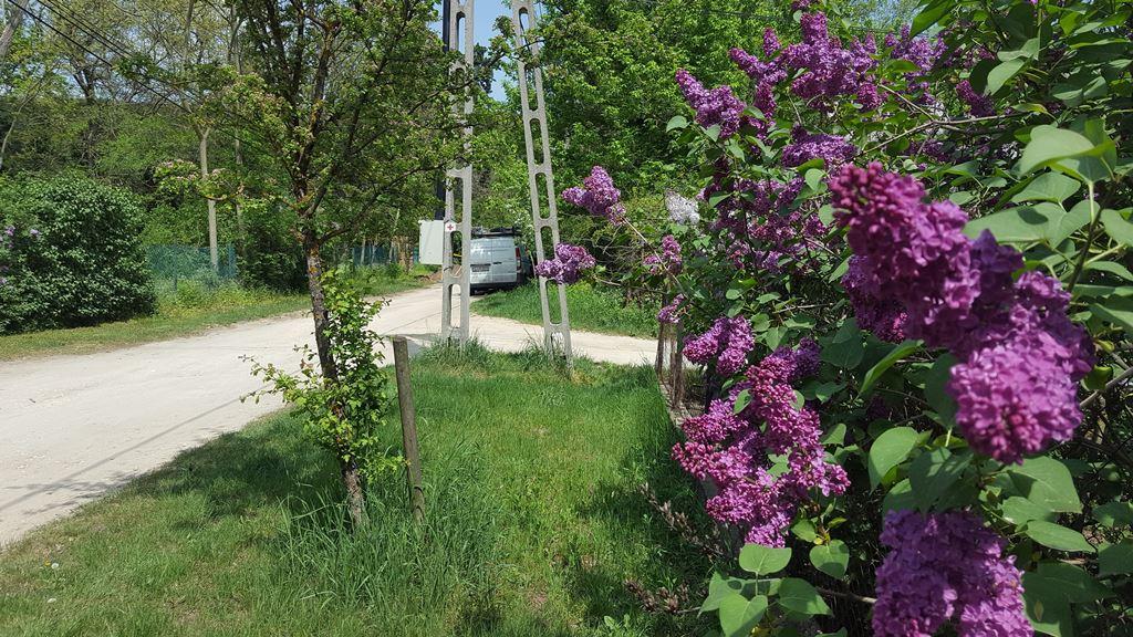 Virágzó orgonabokrok közepette Forrás: Mozgásvilág.hu