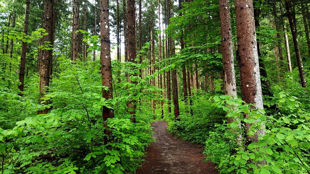 Az erdő teljesen érintetlen benyomást kelt Forrás: Mozgásvilág.hu