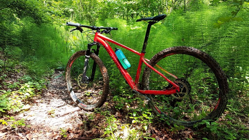 Mezei zsurló a völgy aljában és a Rockrider XC 500 Forrás: Mozgásvilág.hu