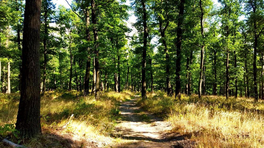 Meseszép nyári erdőben visz az utunk Forrás: Mozgásvilág.hu
