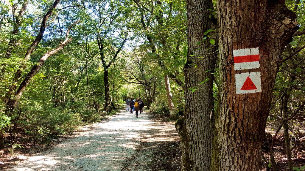 A piros háromszög jelzést követjük Forrás: www.mozgasvilag.hu