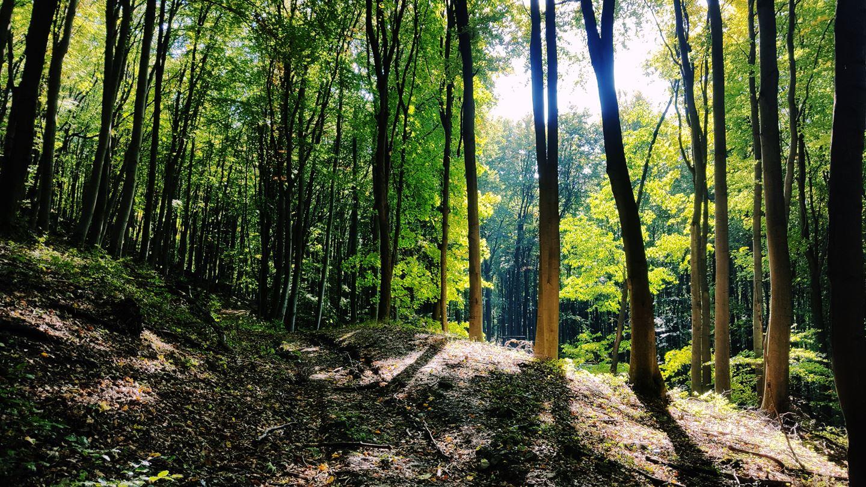 A kék sáv jelzés igazi megkönnyebbülés és nagyon szép itt az erdő. Forrás: Mozgásvilág.hu