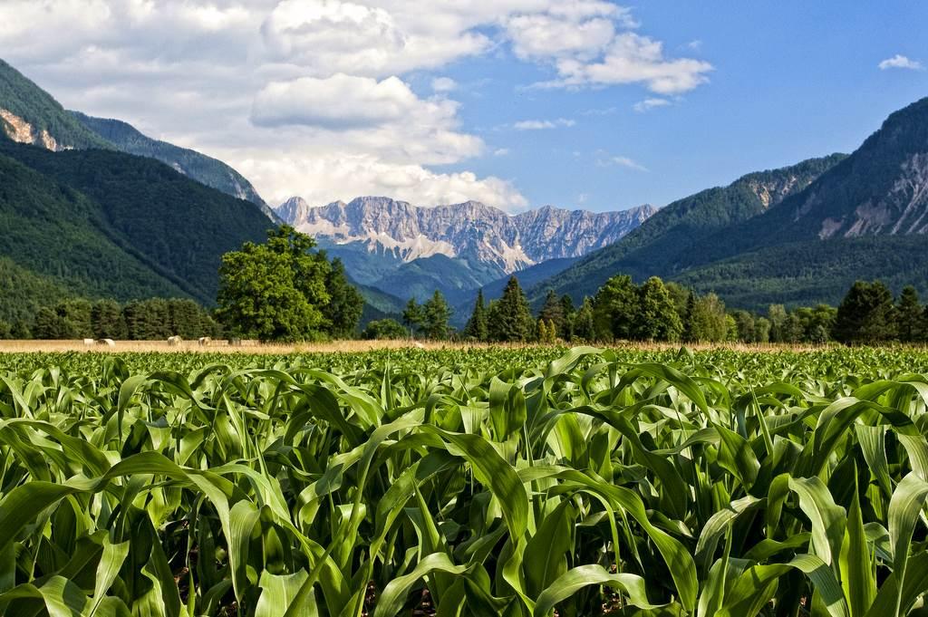 Alpe-Adria Trail Forrás: (c) Kärnten Werbung, Fotograf: Steinthaler