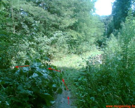 Futás a Kamaraerdőben