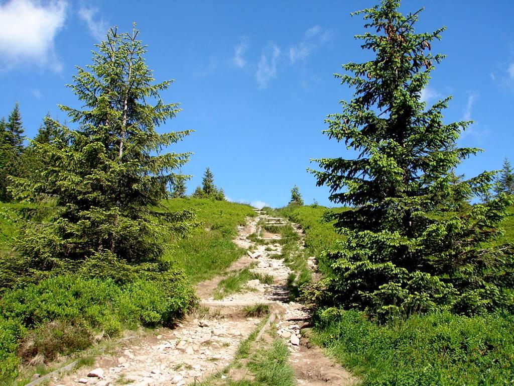 A Szürke-rétről a Rét-hegyen át a Volovecre Forrás: Nagy Árpád