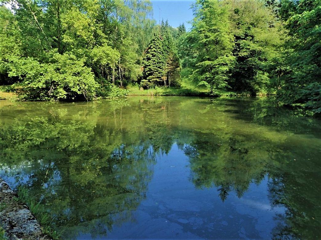 A nagy tó partján az arborétumban Forrás: (c) Nyáry Tamás