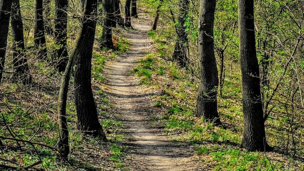 A piros jelzés egy keskeny ösvényen visz tovább Forrás: Nyáry Tamás