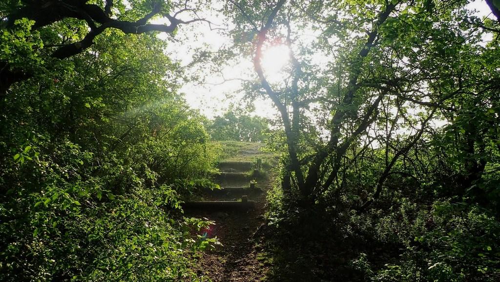 Néhány lépcső és hamarosan elénk tárul a Rupp-hegyi panoráma Forrás: Nyáry Tamás
