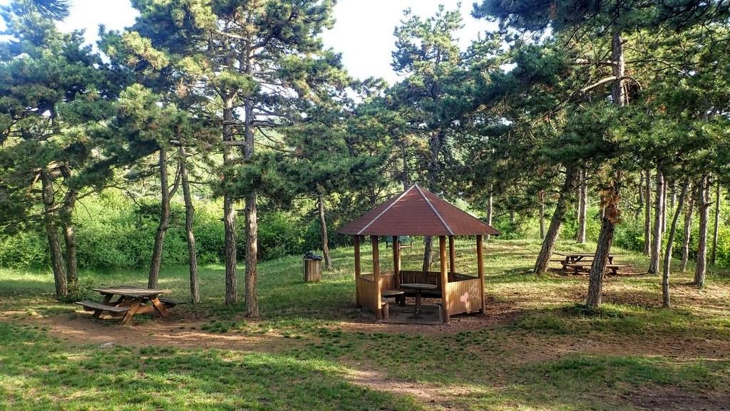 Botanikai és geológiai rezervátum a Nap-hegyen Forrás: Nyáry Tamás