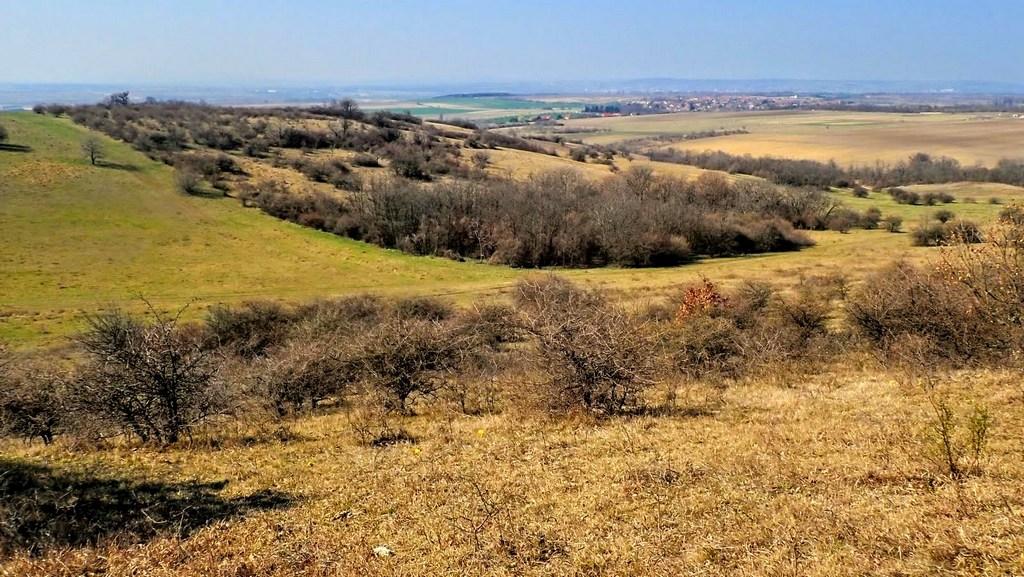 Cserjés bozótok szakítják meg a mező és erdő sávokat Forrás: Nyáry Tamás