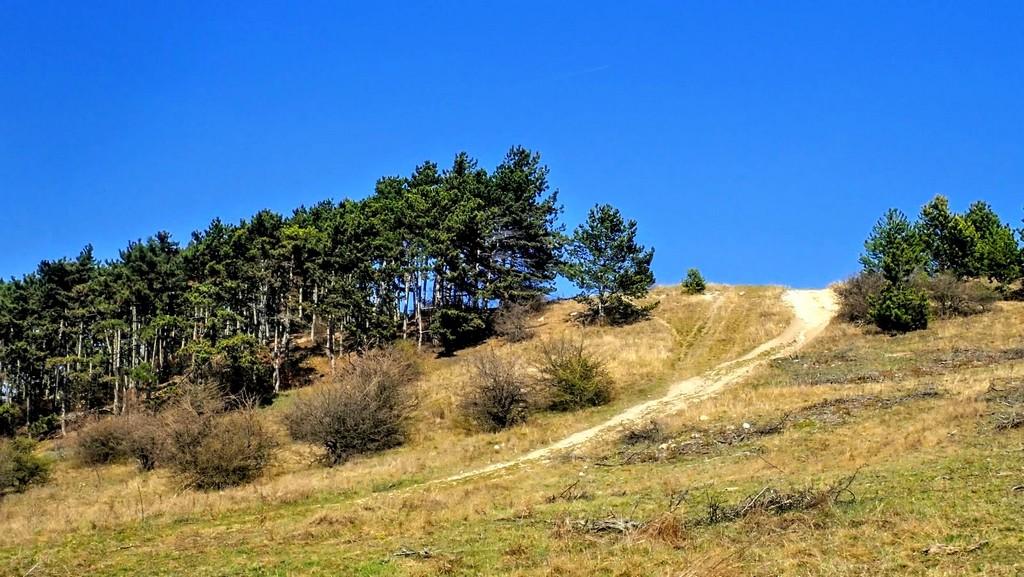 A pátyi kőbányát rejtő dombtető Forrás: Nyáry Tamás