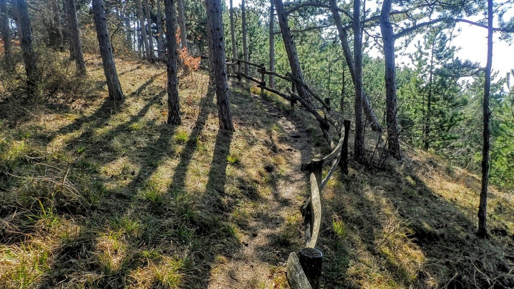 Védelmet biztosító fakorlát a tanösvény mentén Forrás: Nyáry Tamás