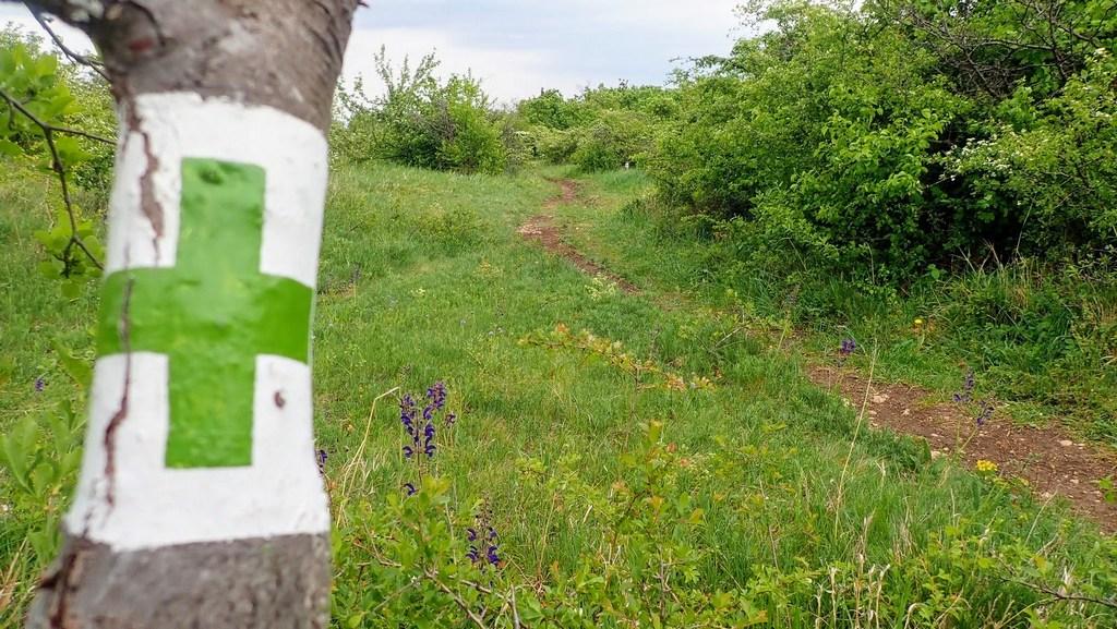 Tovább a zöld kereszten Forrás: Nyáry Tamás