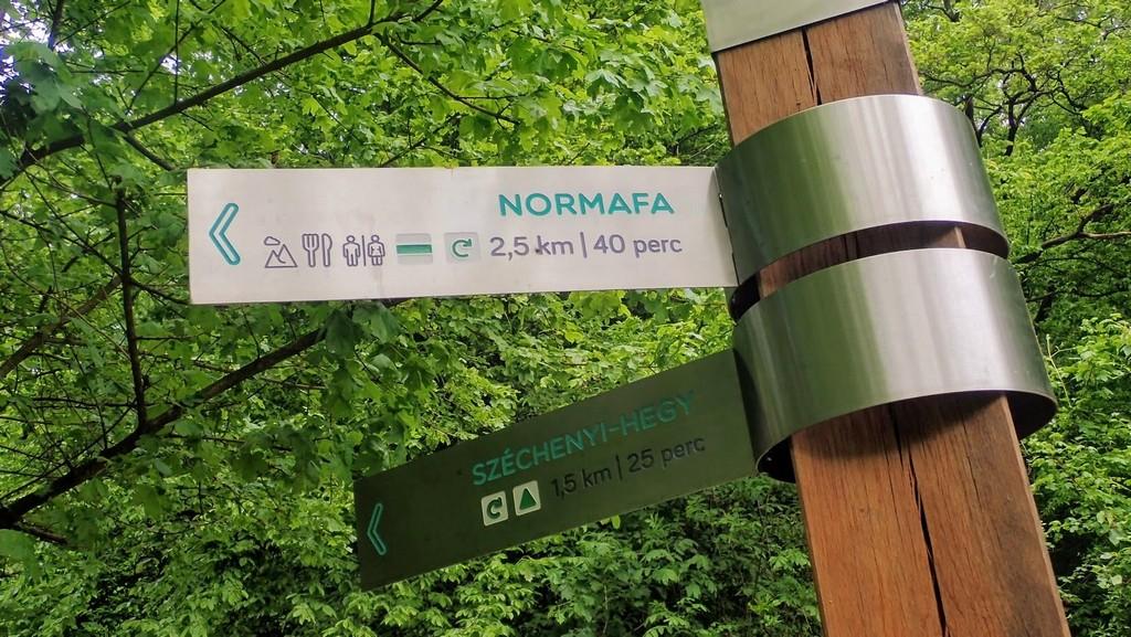 Tovább a Normafa felé Forrás: Nyáry Tamás