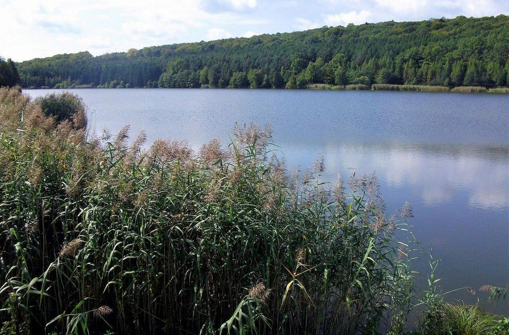 Hársas-tó Forrás: Nyáry Tamás