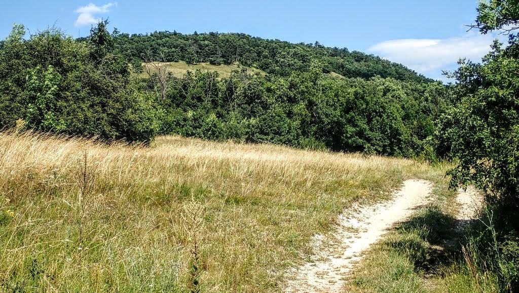 Úton a Kutya-hegyre Forrás: Nyáry Tamás