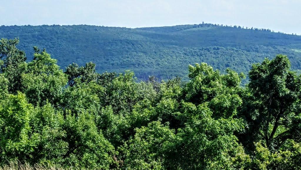 Távolban a Csergezán-kilátó a Nagykopaszon Forrás: Nyáry Tamás