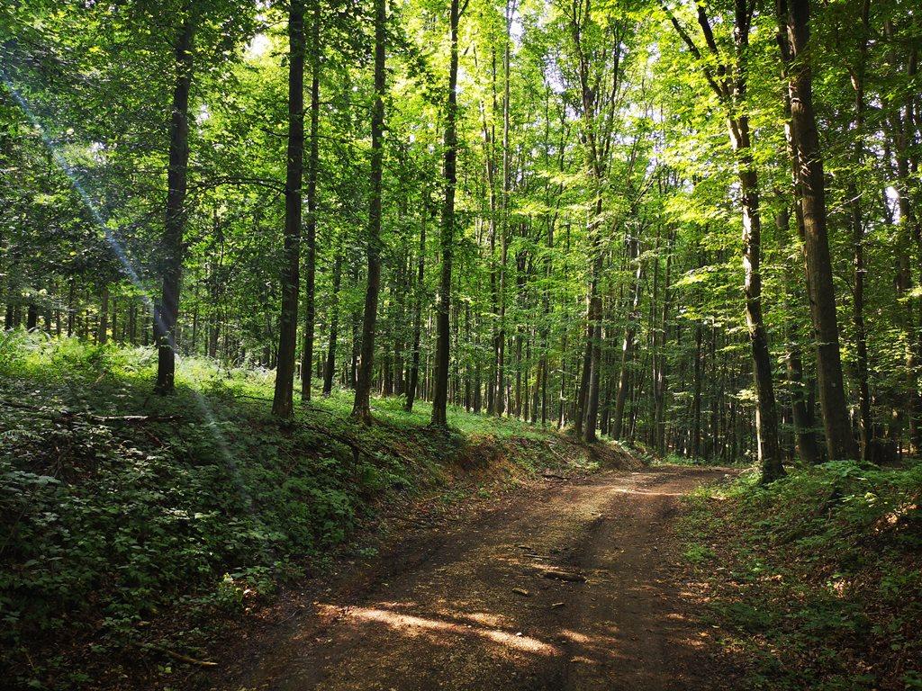 Sűrű erdő az Országos Kéken Forrás: Bárhogy is legyen: mozogj!