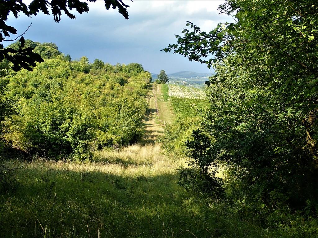 A zöld Mária-út Pécsely fölött Forrás: Nyáry Tamás