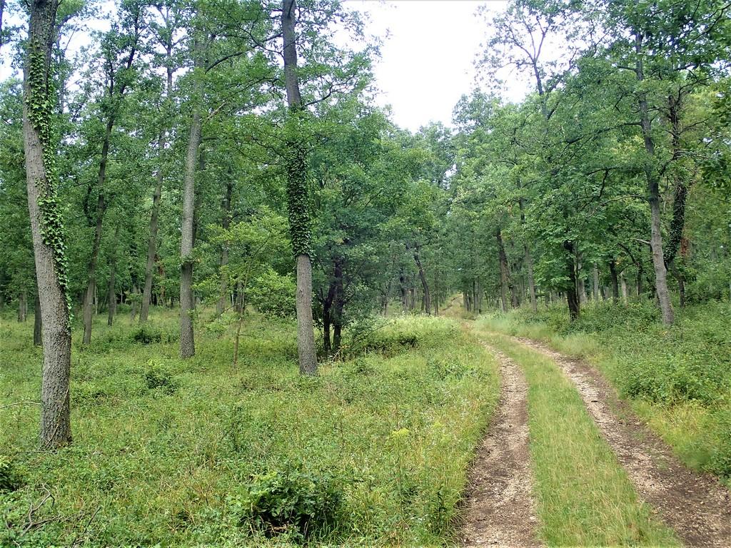 Úton az erdőben a sárga jelzésen Forrás: Nyáry Tamás