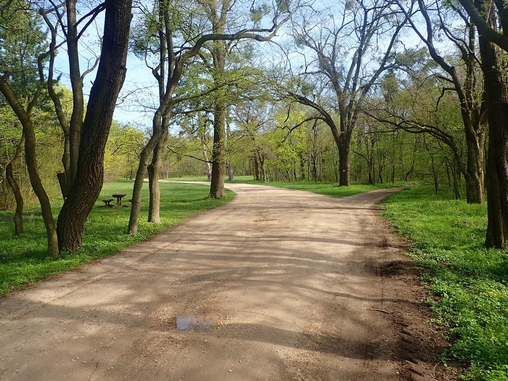 Ligetes sétaút az Eszterházy-kastélytól délre Forrás: Nyáry Tamás