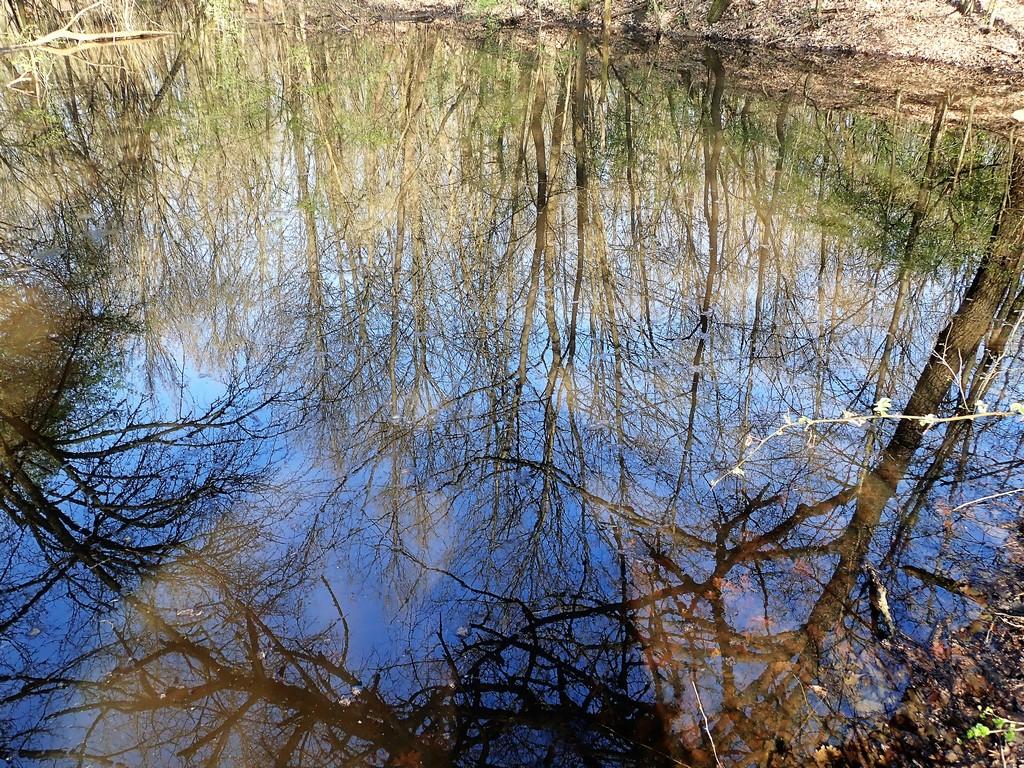 Időszakos tavacska az erdő közepén Forrás: Nyáry Tamás