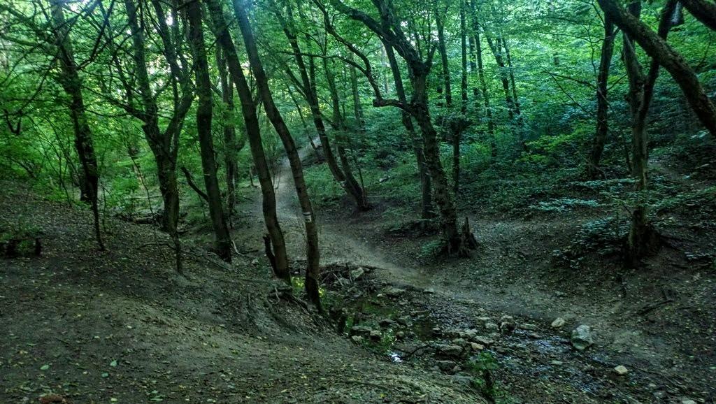 Átkelés a patakon a hegyre vezető ösvényhez Forrás: Nyáry Tamás