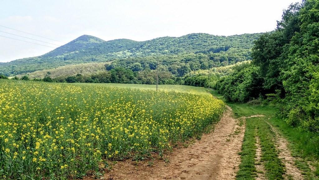 Utunkról jól látszik a Hosszú-hegy vonulata Forrás: Nyáry Tamás
