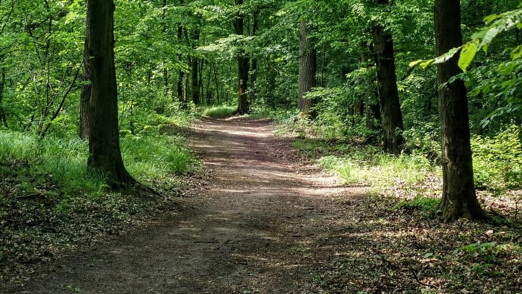 A jelöletlen ösvény, amely a kálvária domb alatti nyeregbe vezet Forrás: Nyáry Tamás
