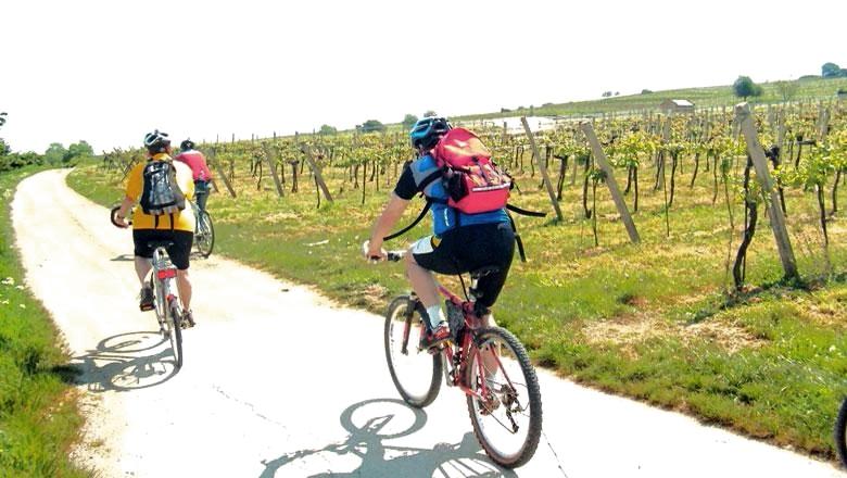 Kényelmes kerékpározás a szőlőskertek mentén Mödlingig Forrás: © Wienerwald Tourismus GmbH