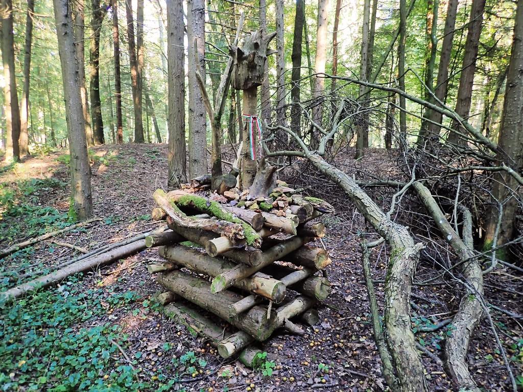 Az erdőben megtaláljuk Szent Vencel templomának helyét Forrás: Nyáry Tamás