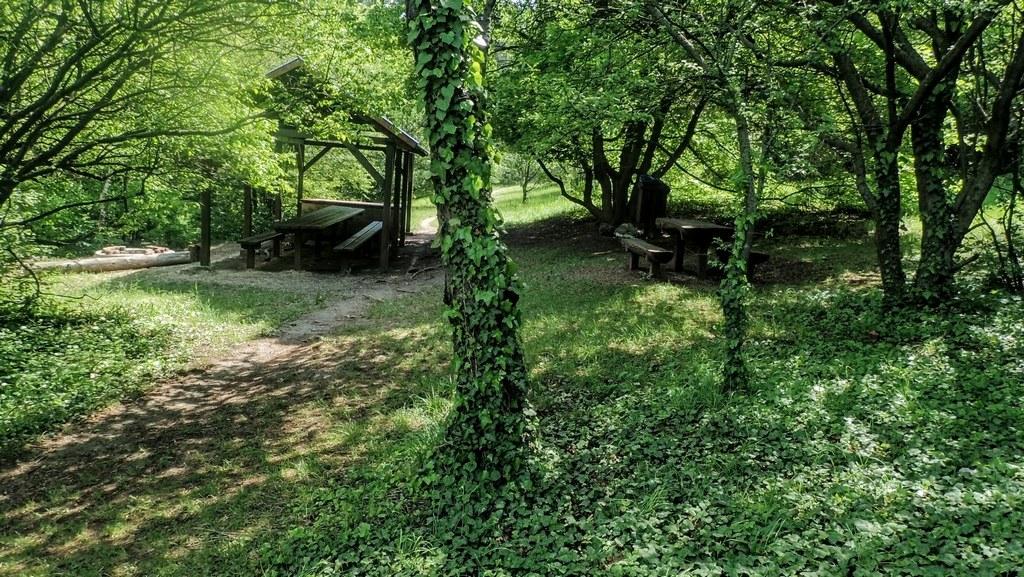 Az erdészház melletti esőbeálló és pihenő Forrás: Nyáry Tamás