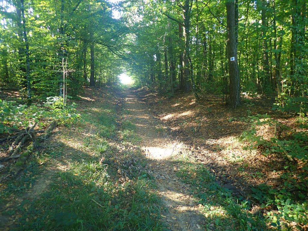 Tovább a kék kereszten az erdőben Forrás: Nyáry Tamás